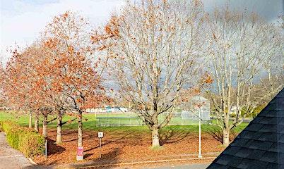 3340 Springfield Drive, Richmond, BC, V7E 1Y8